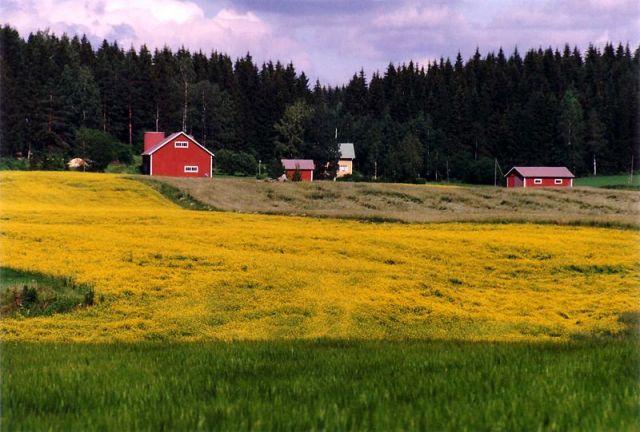 800px-Rural_landscape