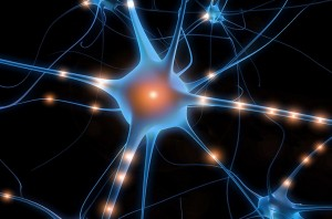 hjärna 5