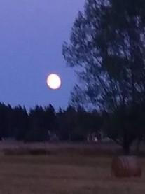 Måne samma kväll